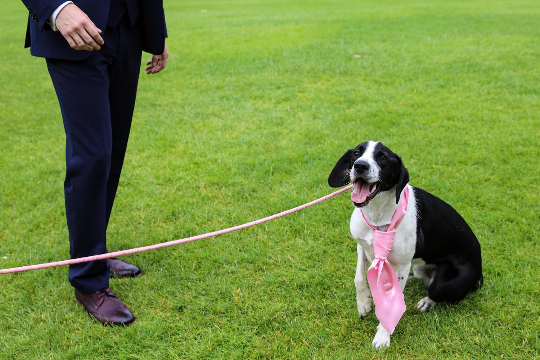 Dog wearing a tie