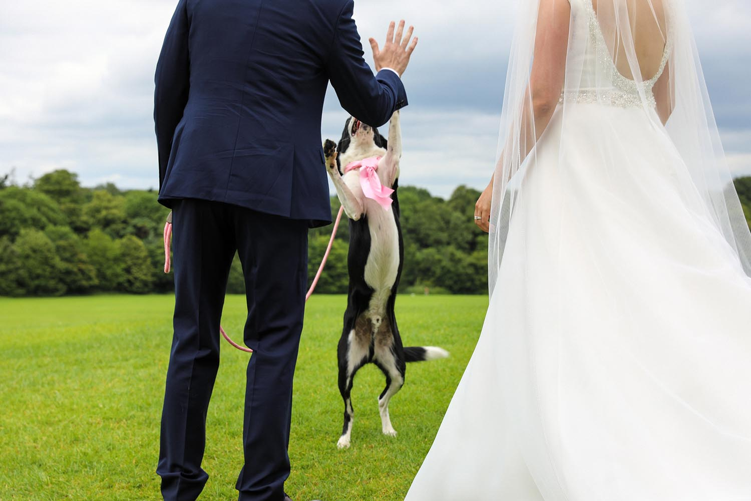 Playing with their dog on their wedding day